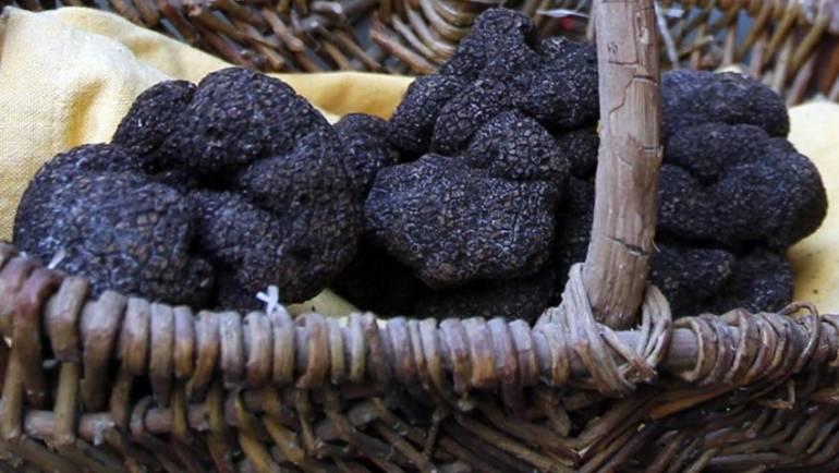 Τρούφα Πιερίας