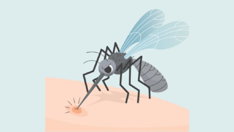 Στοχευμένο πρόγραμμα καταπολέμησης κουνουπιών στη Δ.Ε. Ανατολικού Ολύμπου